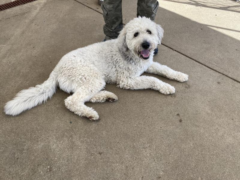 """Helping """"Man's Best Friend"""" At Local Cincinnati Dog Rescue"""
